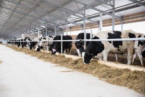 Крупнейшая молочно-товарная ферма в России откроется в Московской области